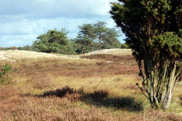 Hiddensee Heide